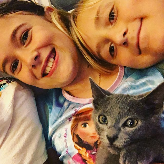 Kittens settling in. First family selfie for Toulouse!
