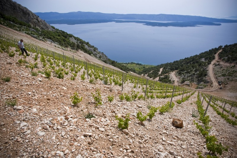 Wines of the Mediterranean Islands - June, 2017
