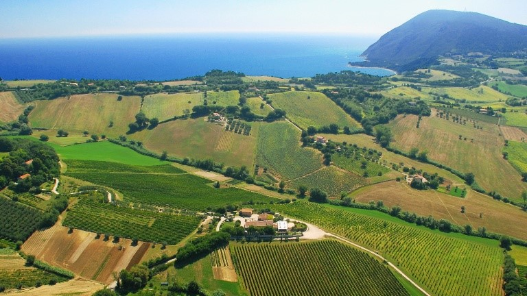 The Wines of Marche - October, 2017
