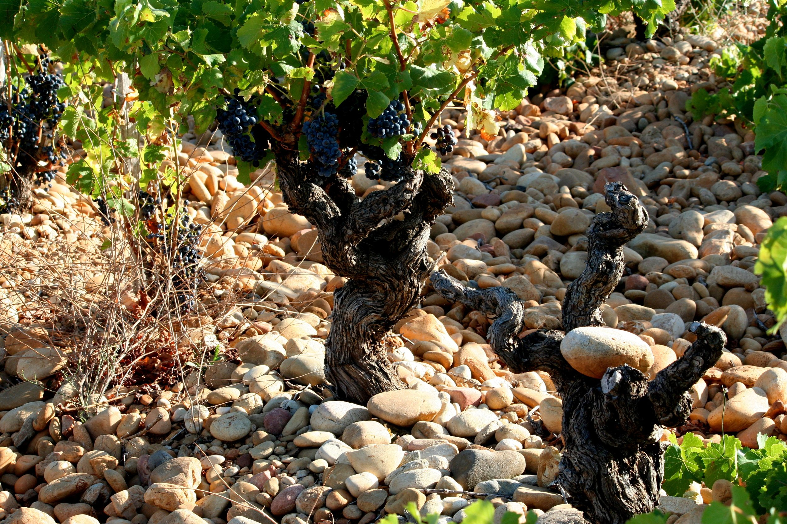 Wines of theSouthern Rhone - December, 2017