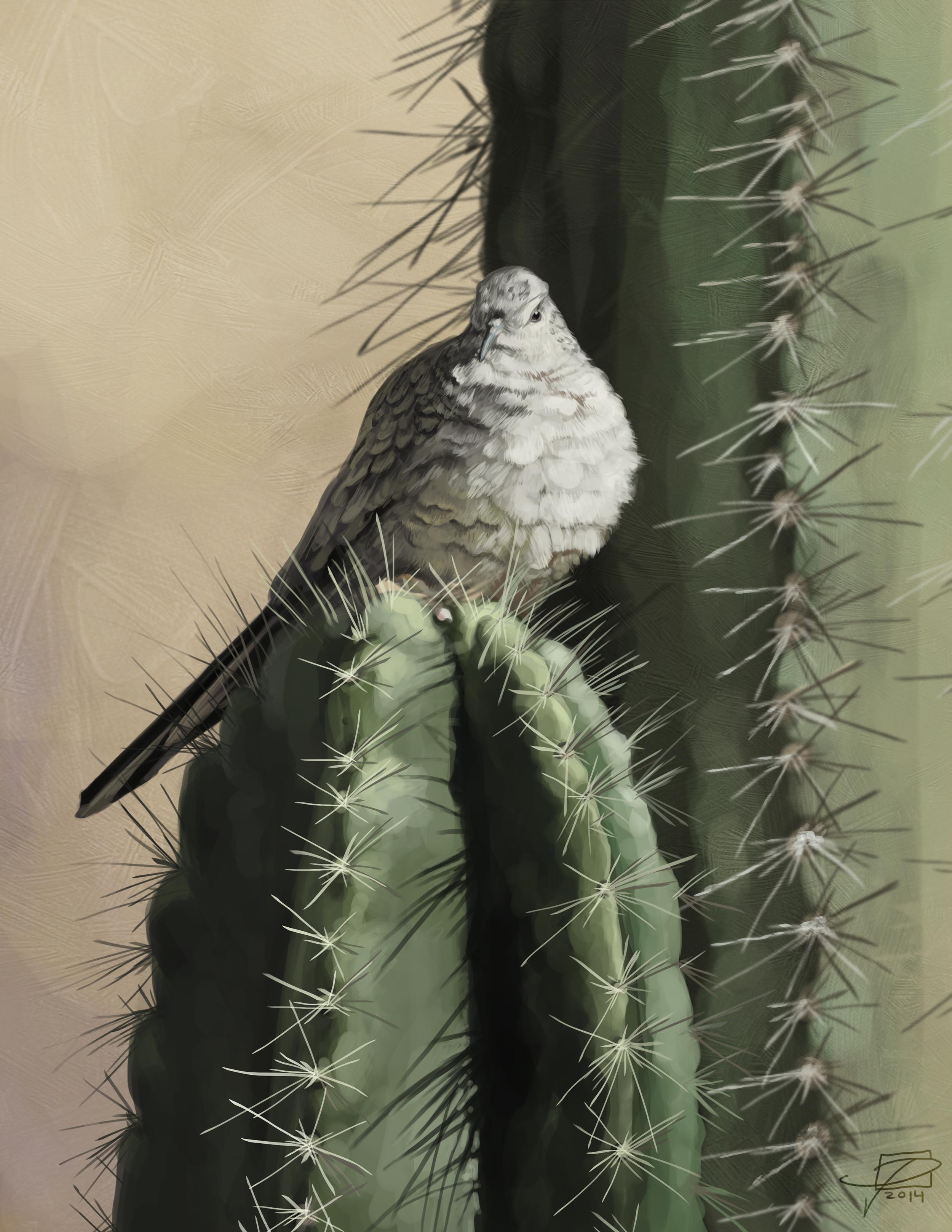 Cactus Dove