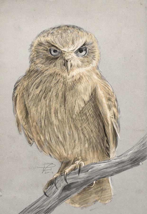 boobook owl.jpg