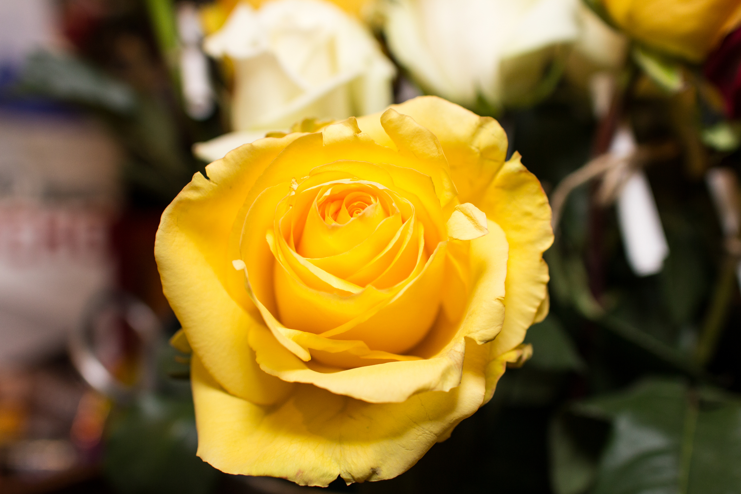CFF_Annapolis_65_Roses_Charity_Photography-3.jpg