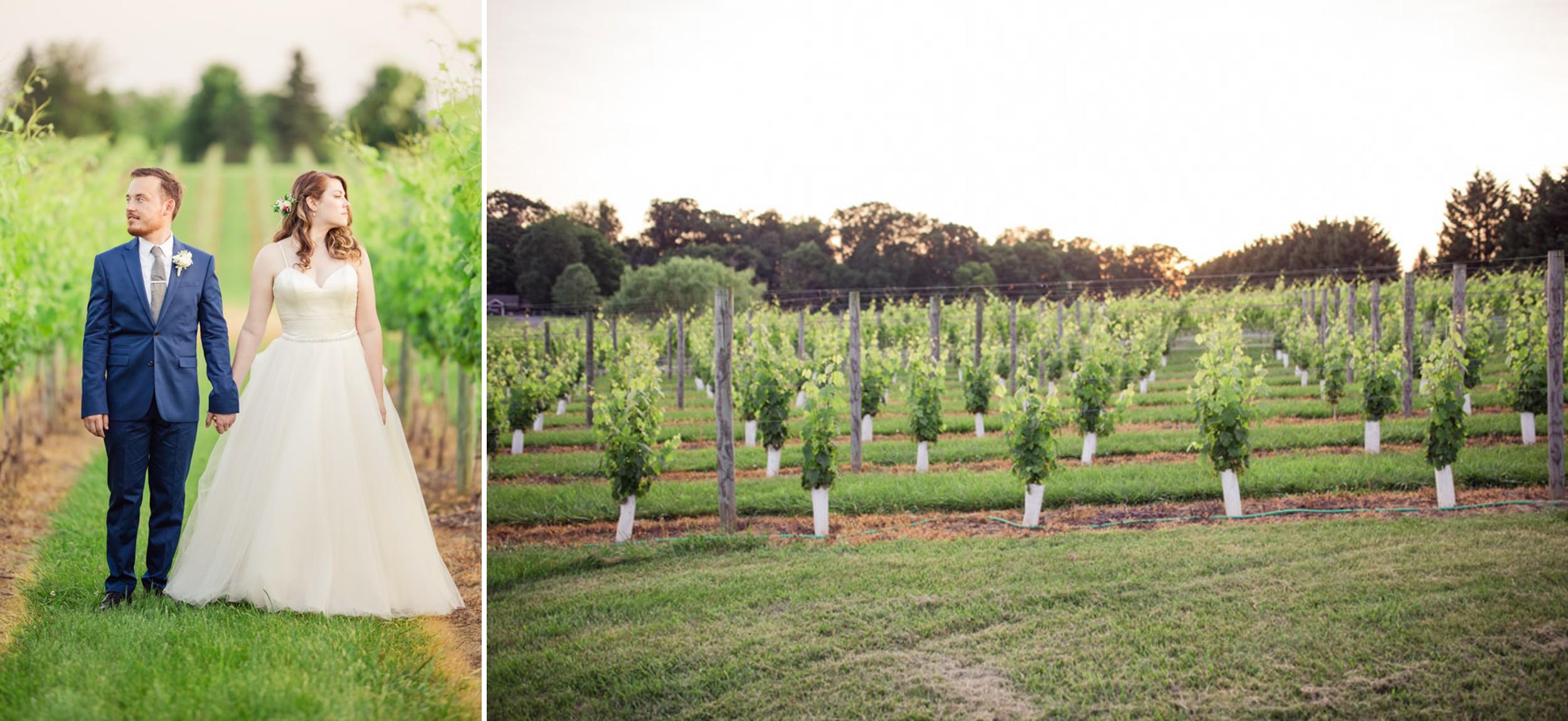 8 Chains North Winery Vineyard
