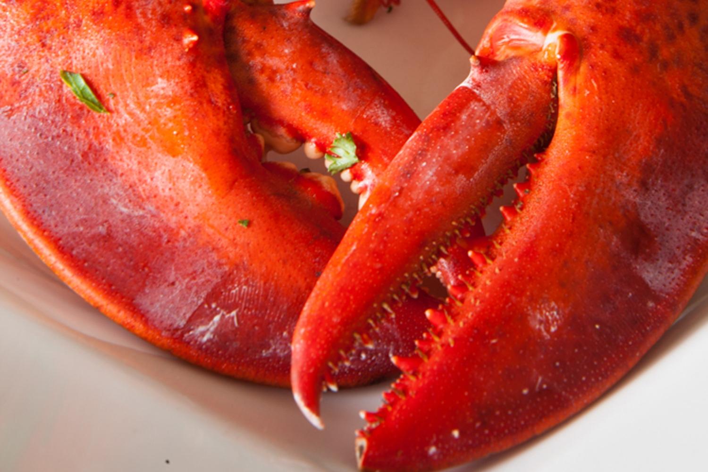 Lobster Night*