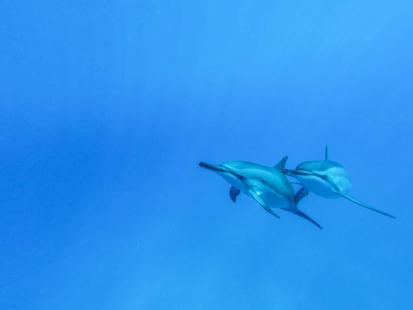 underwater--004.jpg