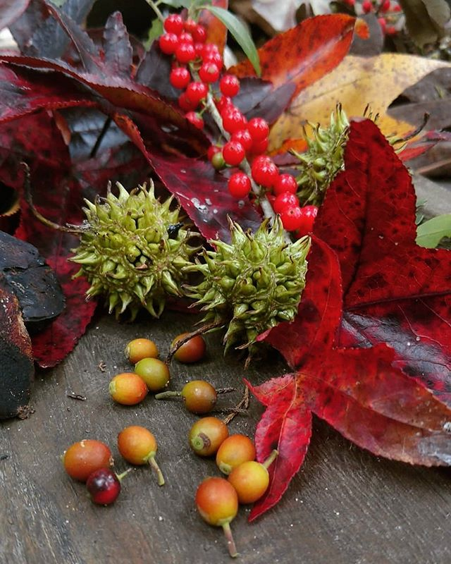 I could not fake this color if I tried. Nature is filled with beautiful color. . .. ... #imagestudiosgroupllc #artinmotionjewelry #colorful #crimson #texasautumn #fallcolors #stilllifephotography