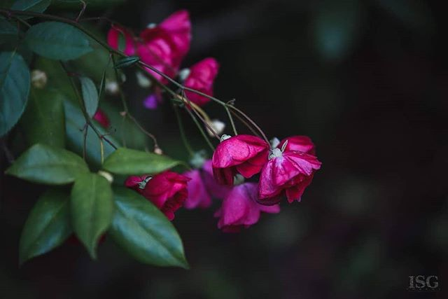 Nature Photography  #imagestudiosgroupllc #naturalphotography #flowers #roses #nightphotography