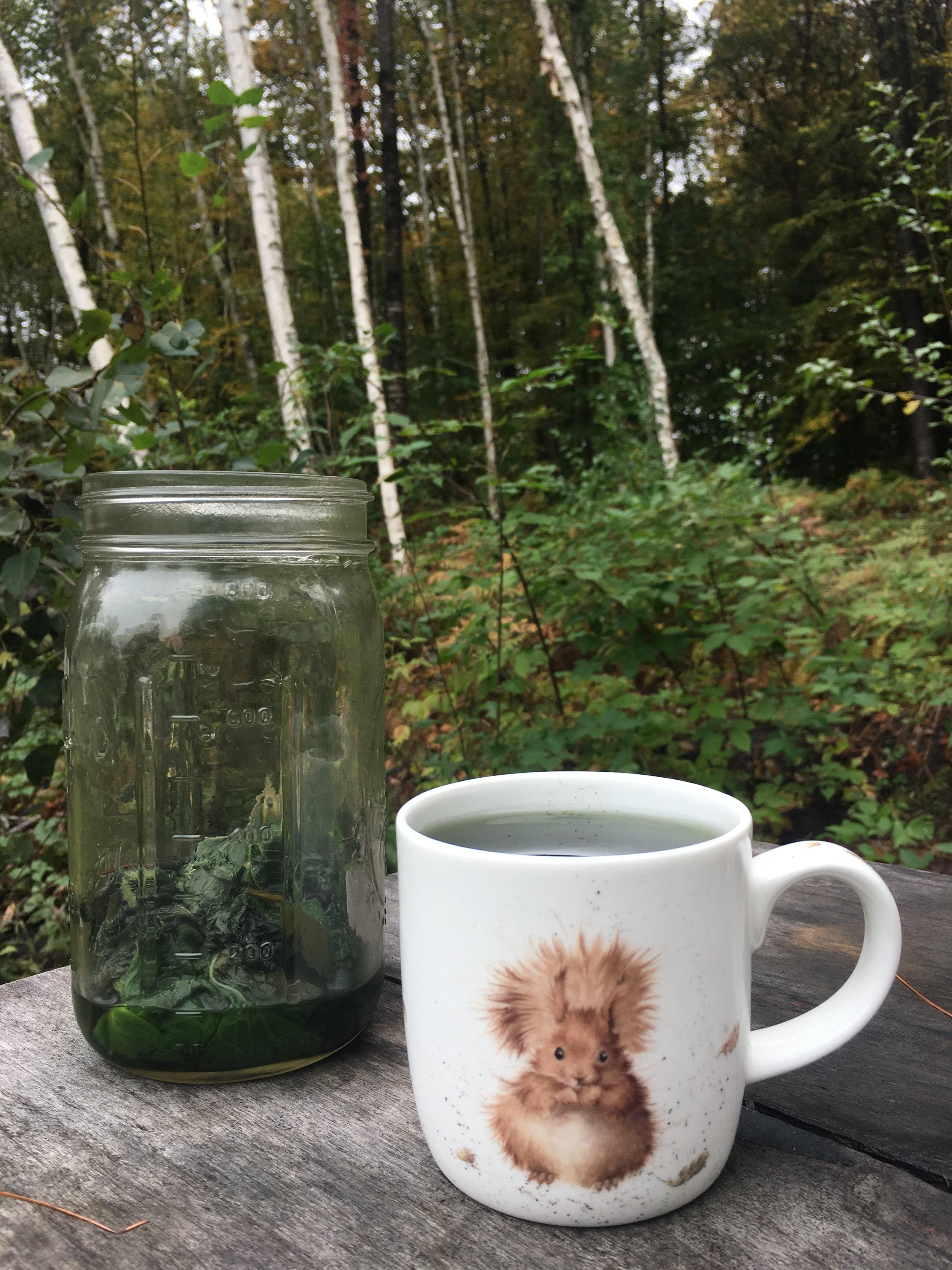 Handpicked Nettle Infusion