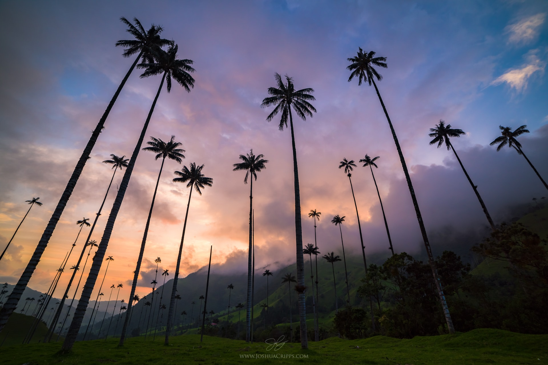Explore Cocora Valley  -  (Photo credit:    Joshua Cripps   ) -  Most people travel to Salento for the purpose coffee or this: hiking the Valle de Cocora. This National Park is full of these cartoon-like trees. This tree, the Wax Palm, stands at 60 meters high and is the tallest palm tree in the world.