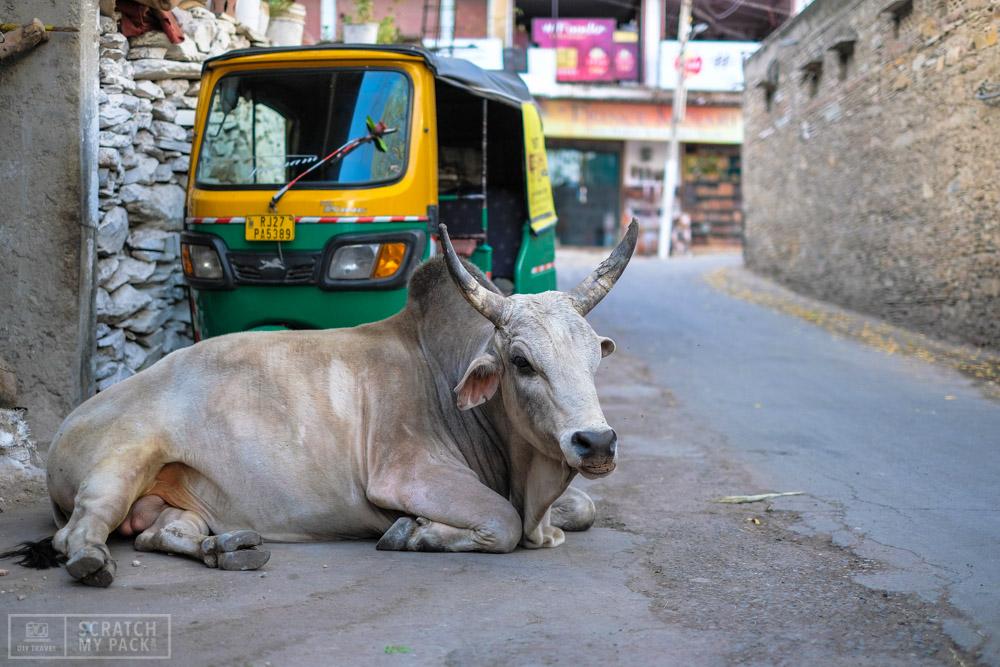Udaipur_ERL-30.jpg