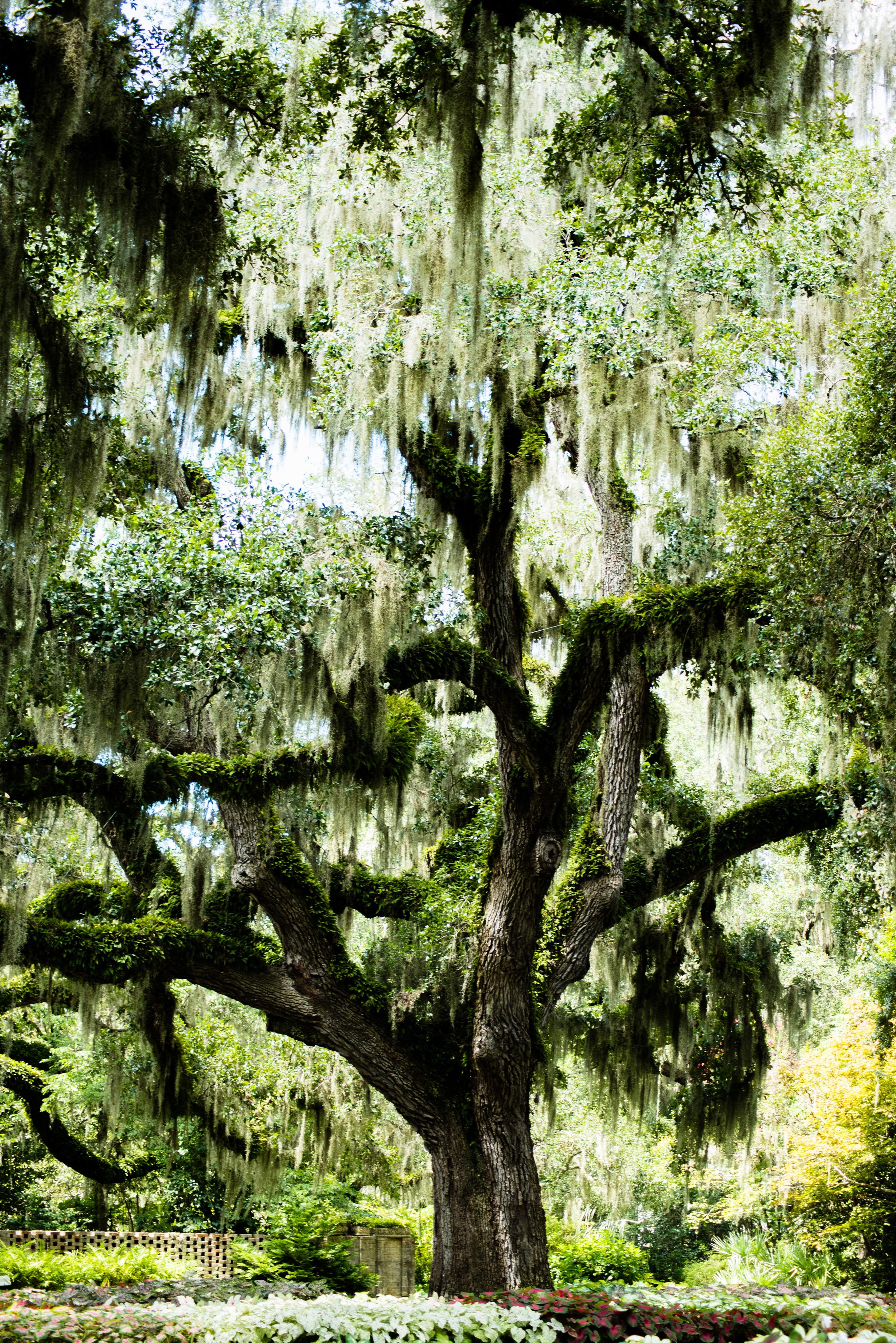 brookgreen garden myrtle beach-9.jpg