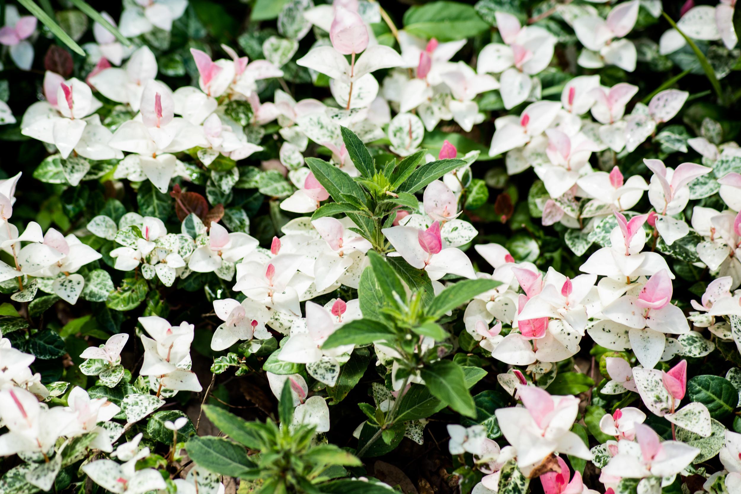 brookgreen garden myrtle beach-18.jpg