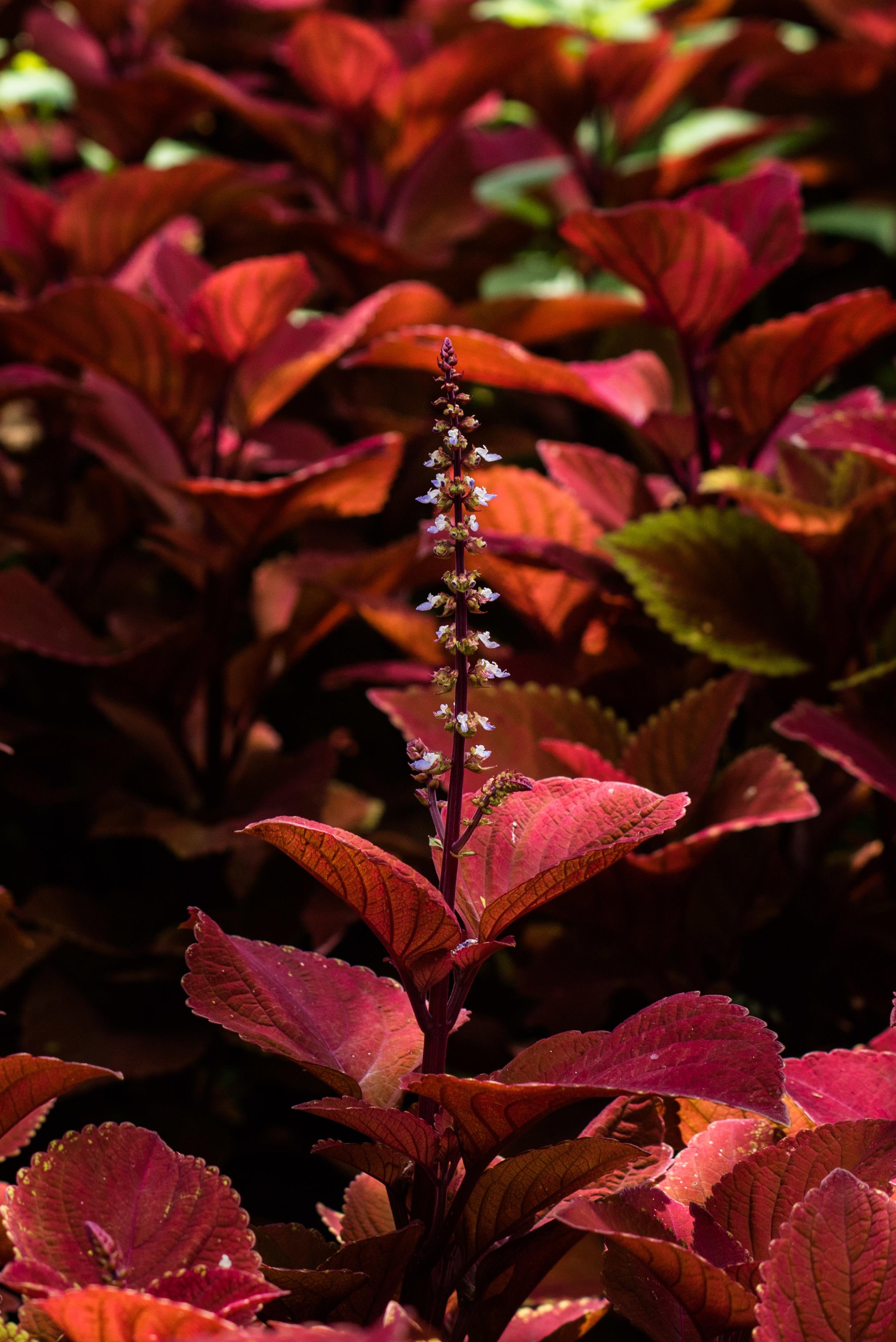 brookgreen garden myrtle beach-40.jpg