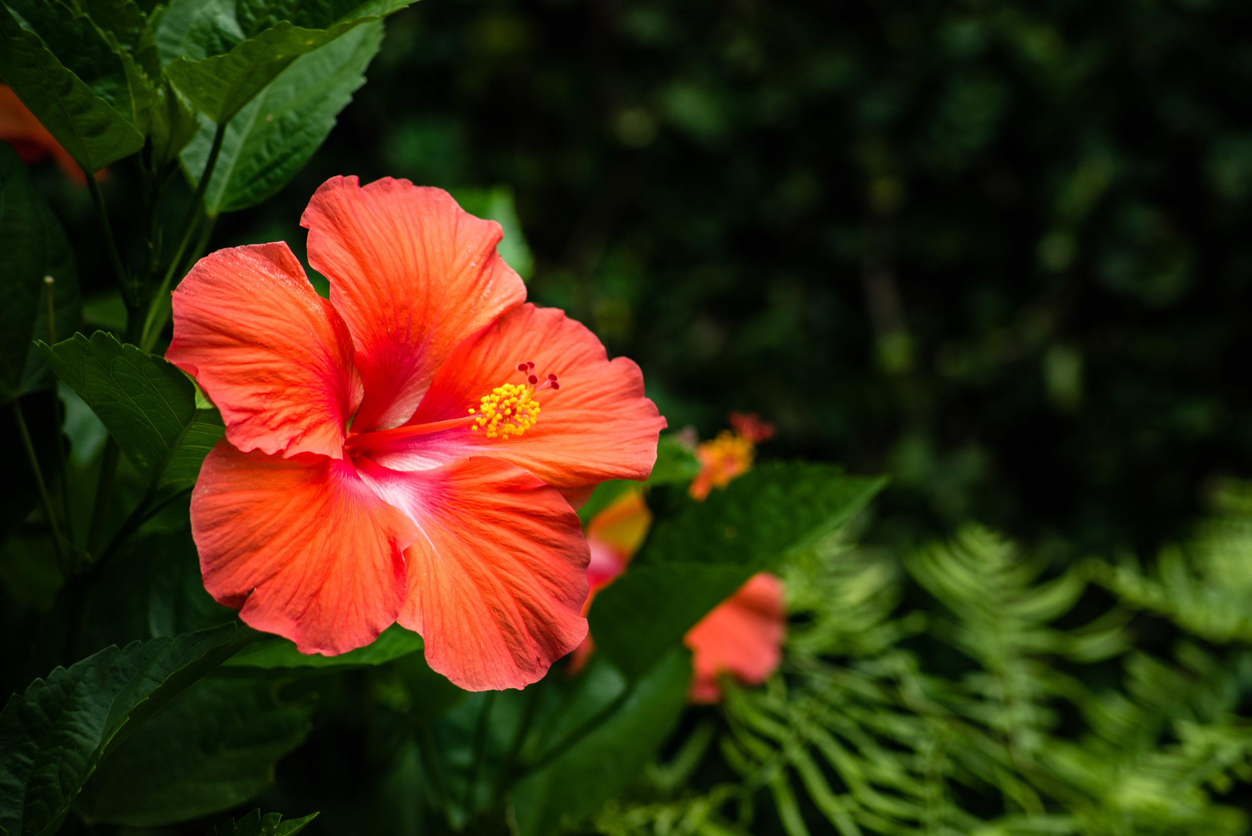 brookgreen garden myrtle beach-46.jpg