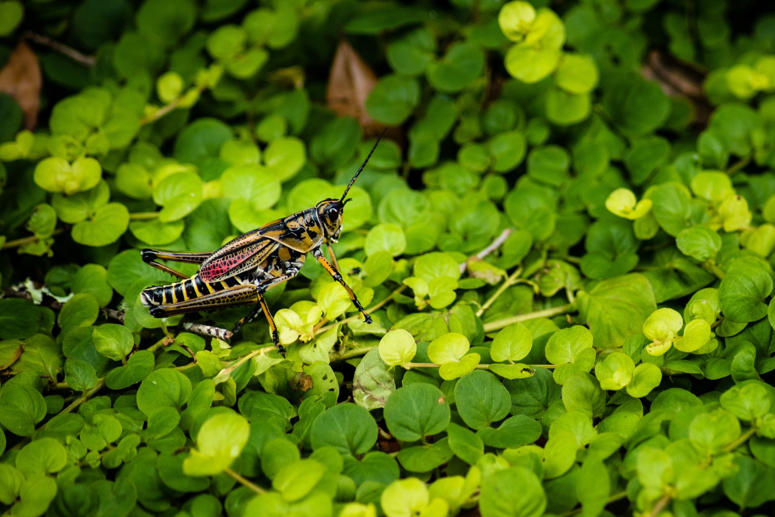 brookgreen garden myrtle beach-47.jpg