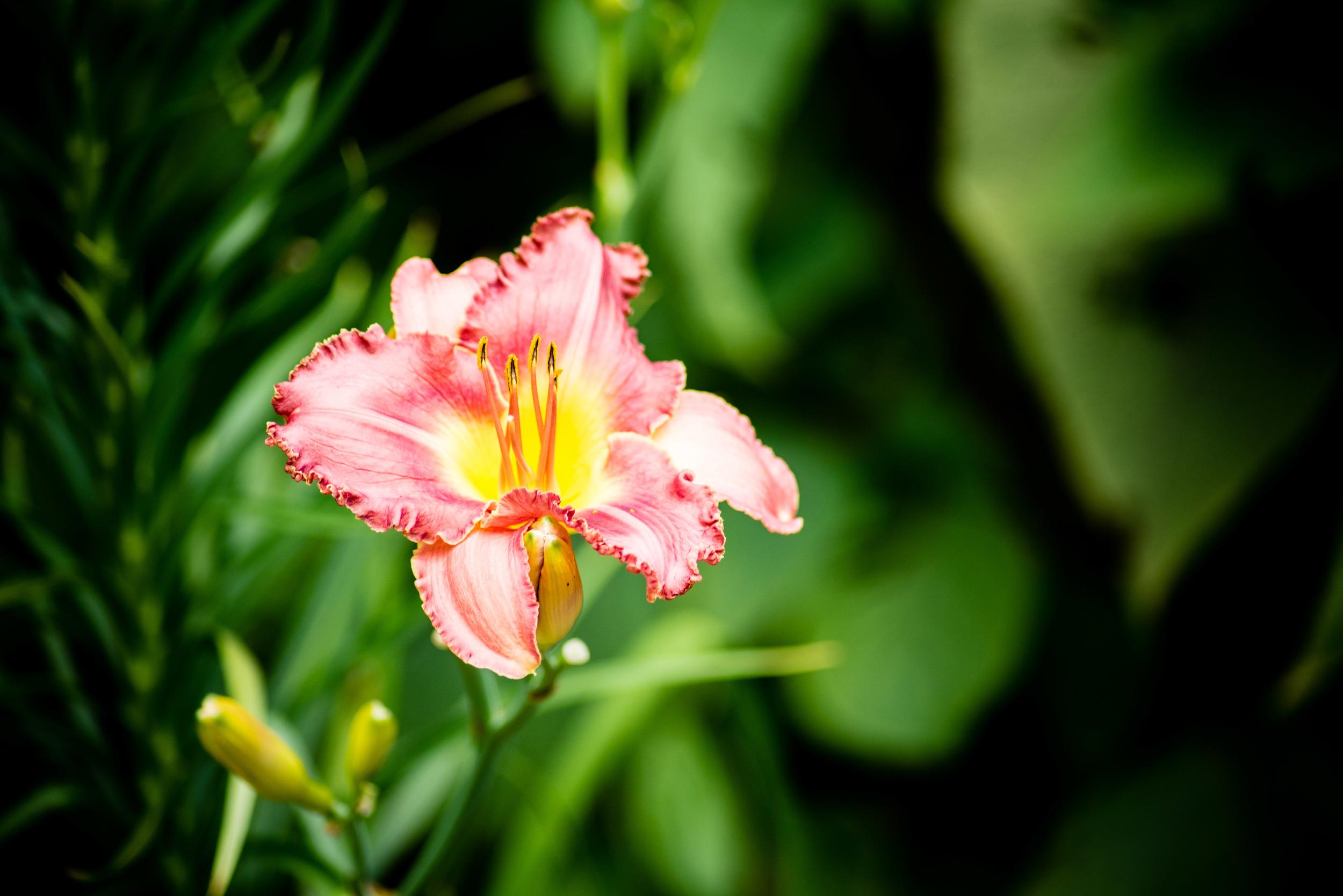 brookgreen garden myrtle beach-50.jpg