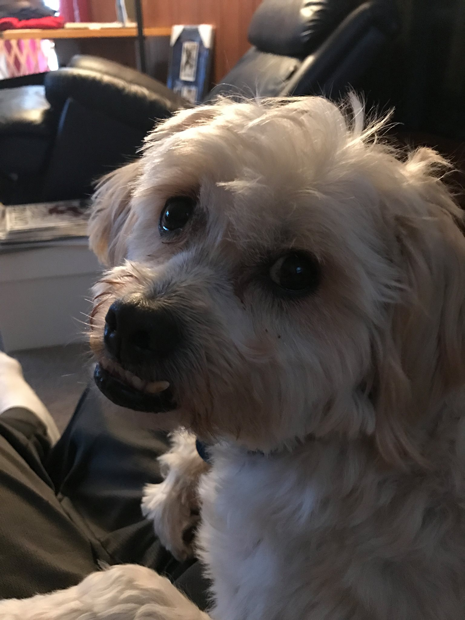20. Kaiser - He will be 9 in April. He is a shih tzu poodle mix. Kaiser likes to eat flies and tries to steal food right out of my hand, one time he snagged the lettuce from my Wendy's hamburger I was eating. He's the best.