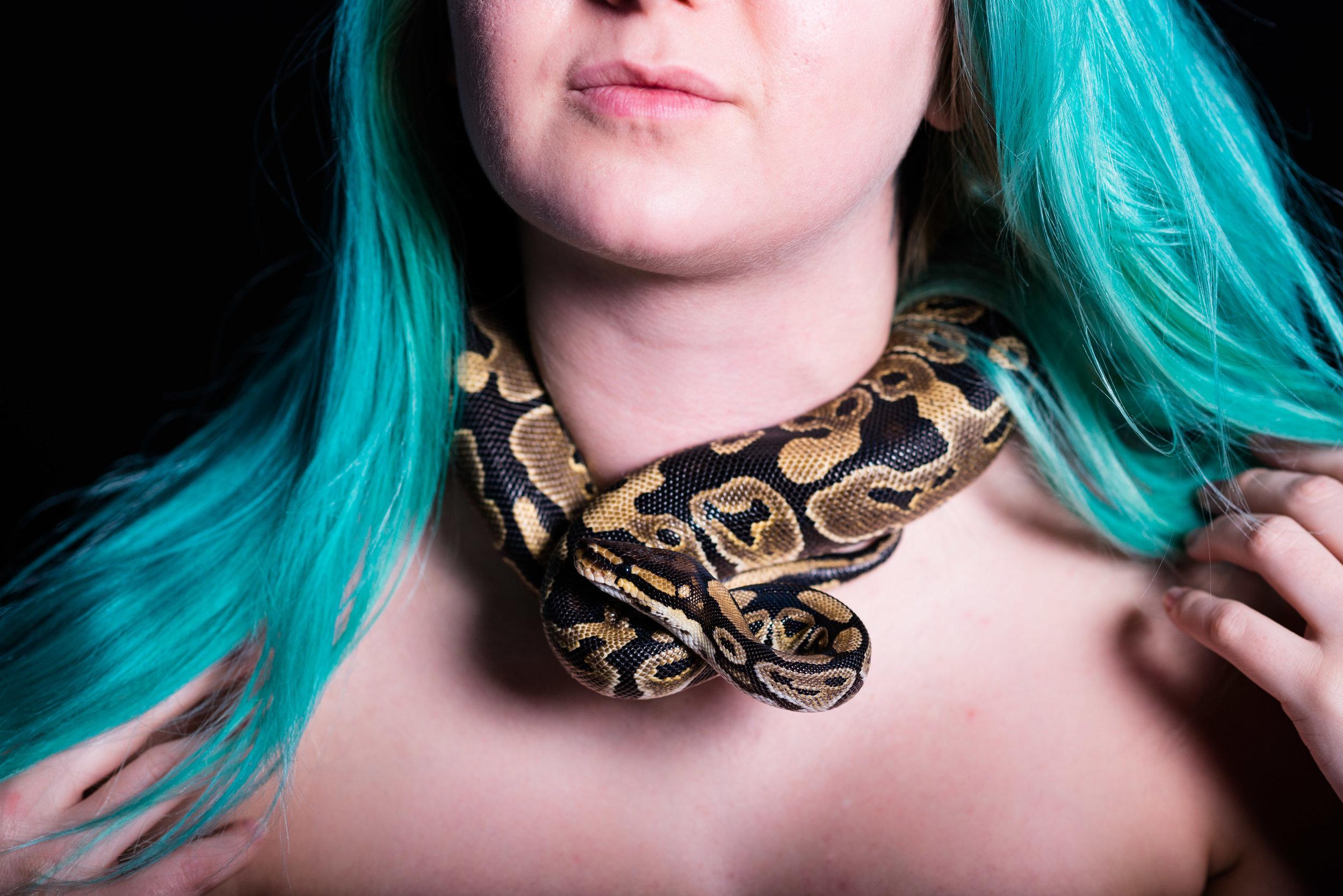 snake themed image