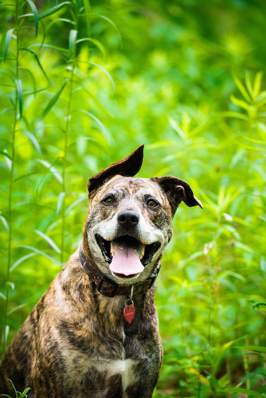 toledo dog photographer