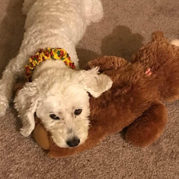 2. Rosie - Rosie is a bichon/cocker spaniel mix who will be 14 in May. She loves going for long walks, shopping at dog-friendly stores, and sleeping. (She also loves big, cuddly toys and being spoiled by her mama 😉.)