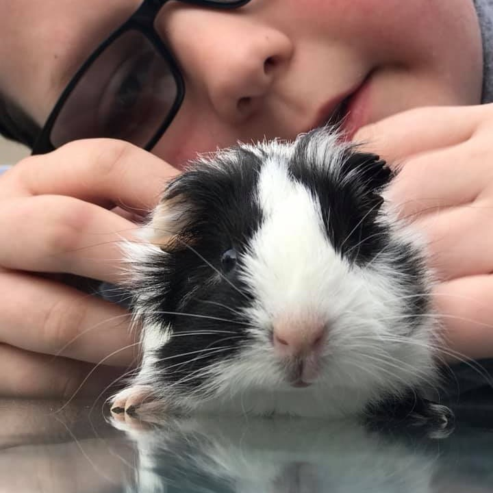 8. Lanny - This is Lanny-he was found to be a she after naming, so now we mostly call he princess, she just turned 2! Oh and she would be a long haired guinea pig.