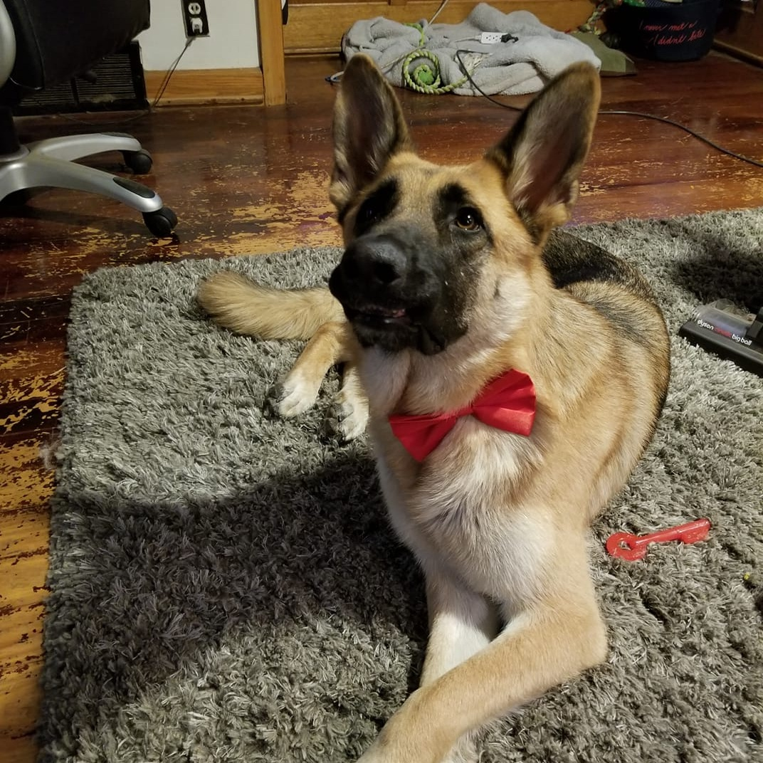 9. Dakota - This is Dakota he is a spunky two year old German Shepherd. He has 1 brother and three sisters so he loves any attention he can get. He loves cuddles and his mommy.