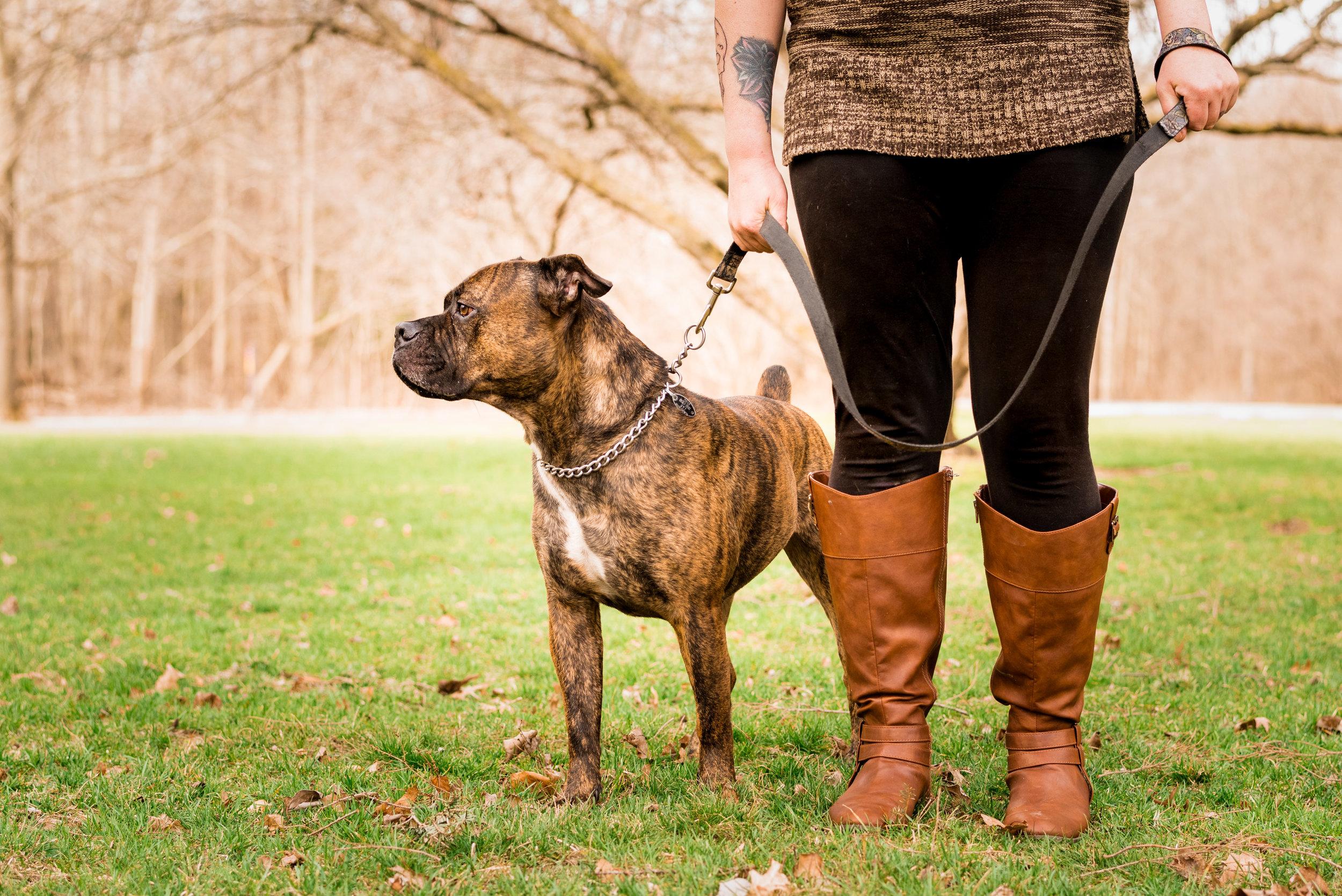 northwest ohio pet photography
