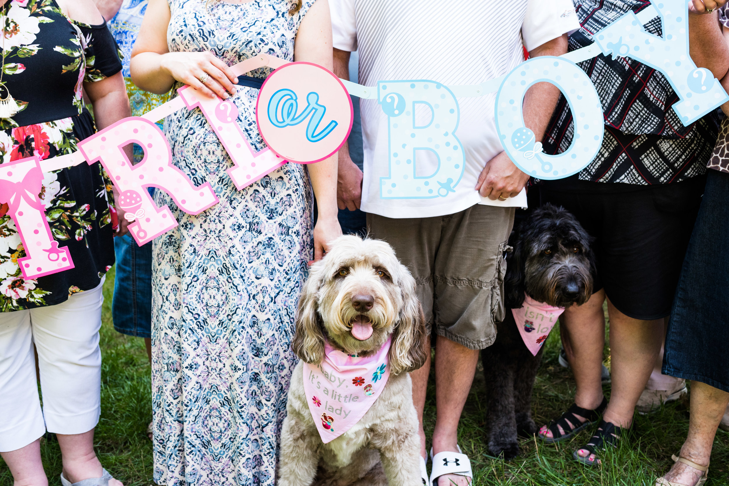 dogs reveal baby gender