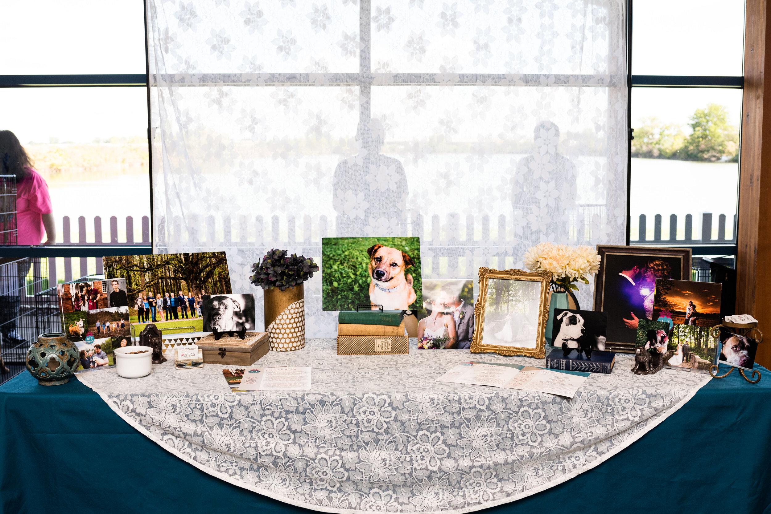 toledo area pet photography pet adoption-1.jpg