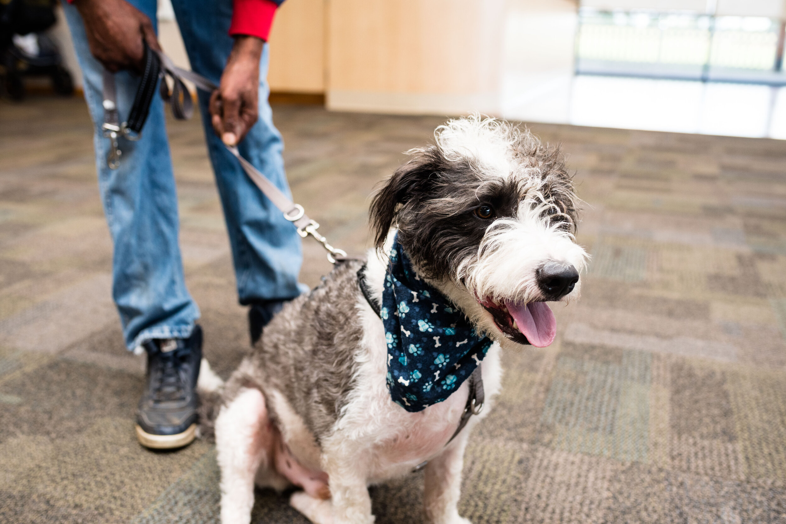 toledo area pet photography pet adoption-17.jpg