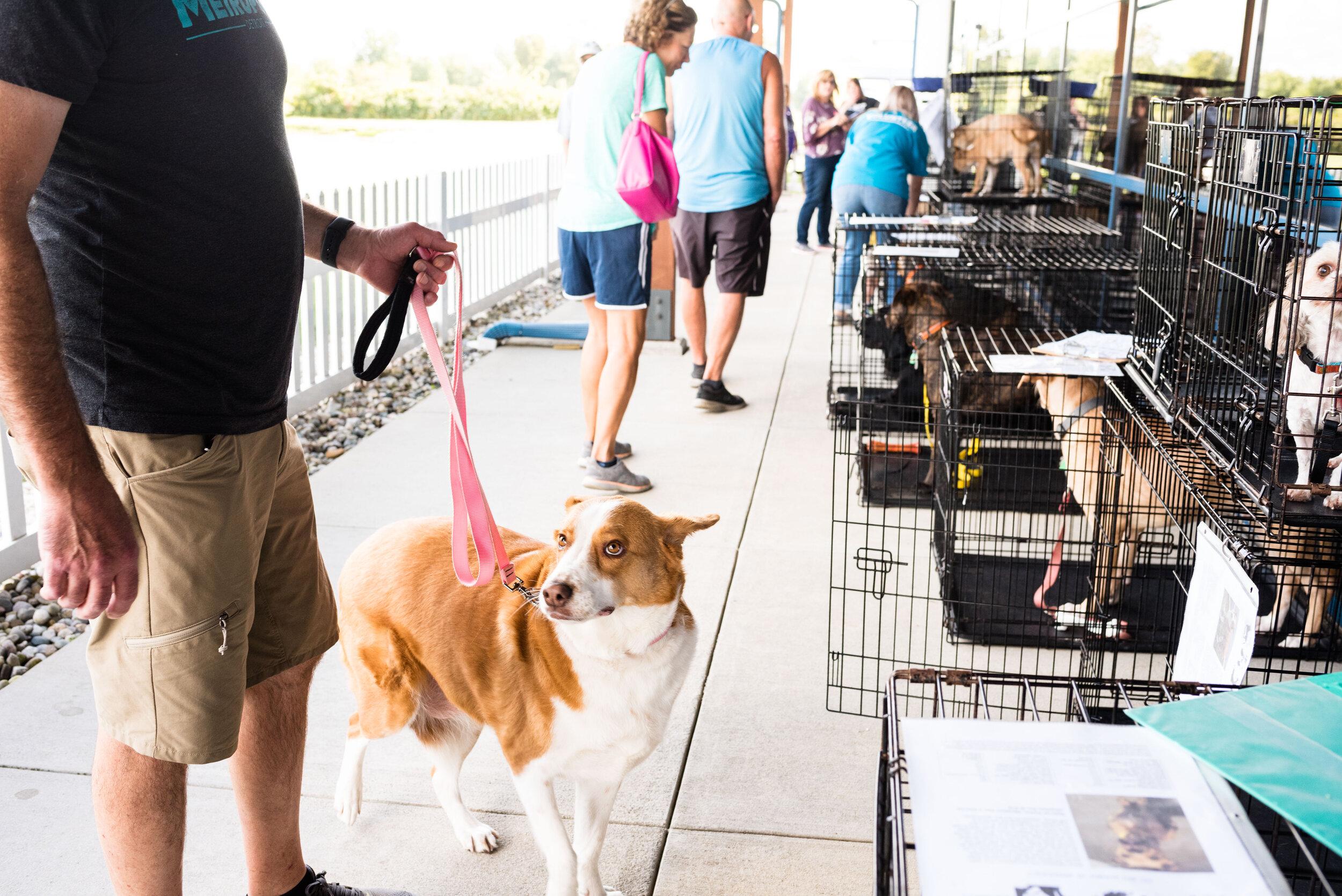 toledo area pet photography pet adoption-26.jpg