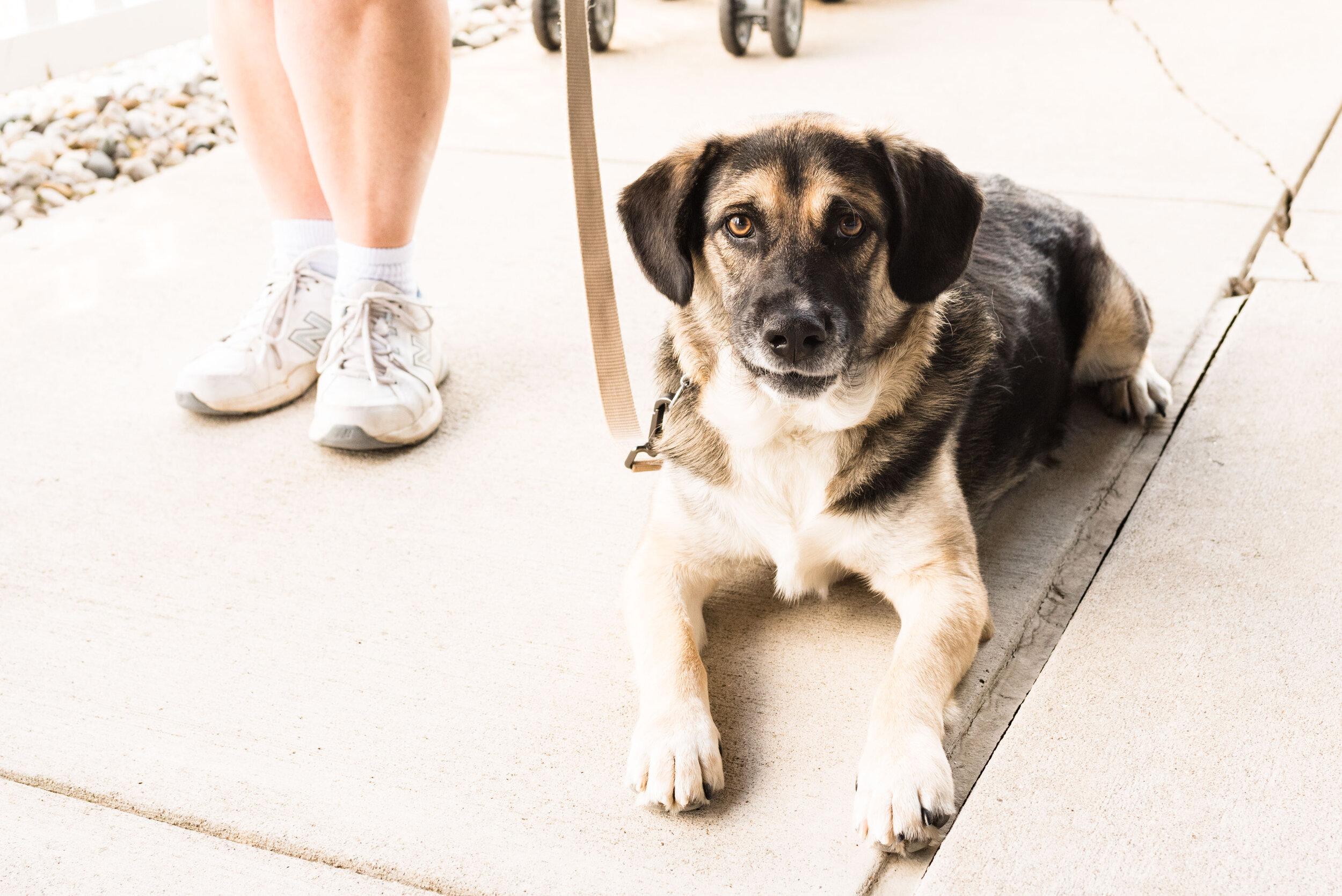 toledo area pet photography pet adoption-28.jpg