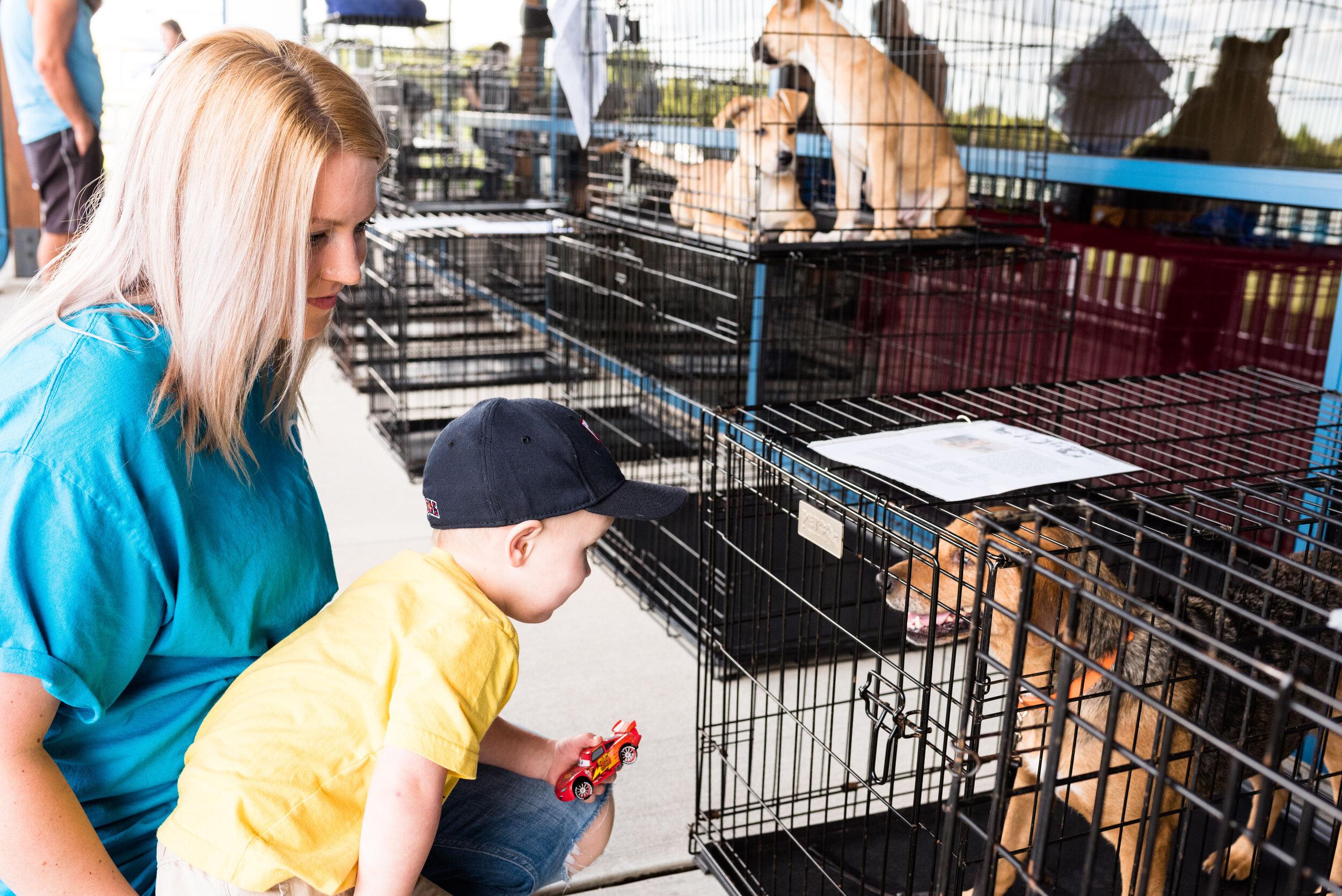 toledo area pet photography pet adoption-27.jpg