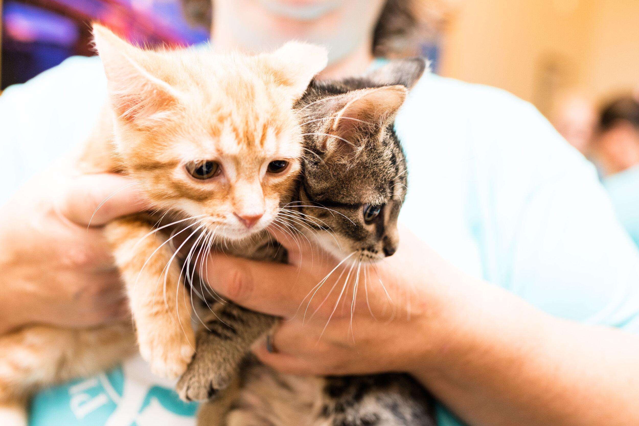 toledo area pet photography pet adoption-33.jpg