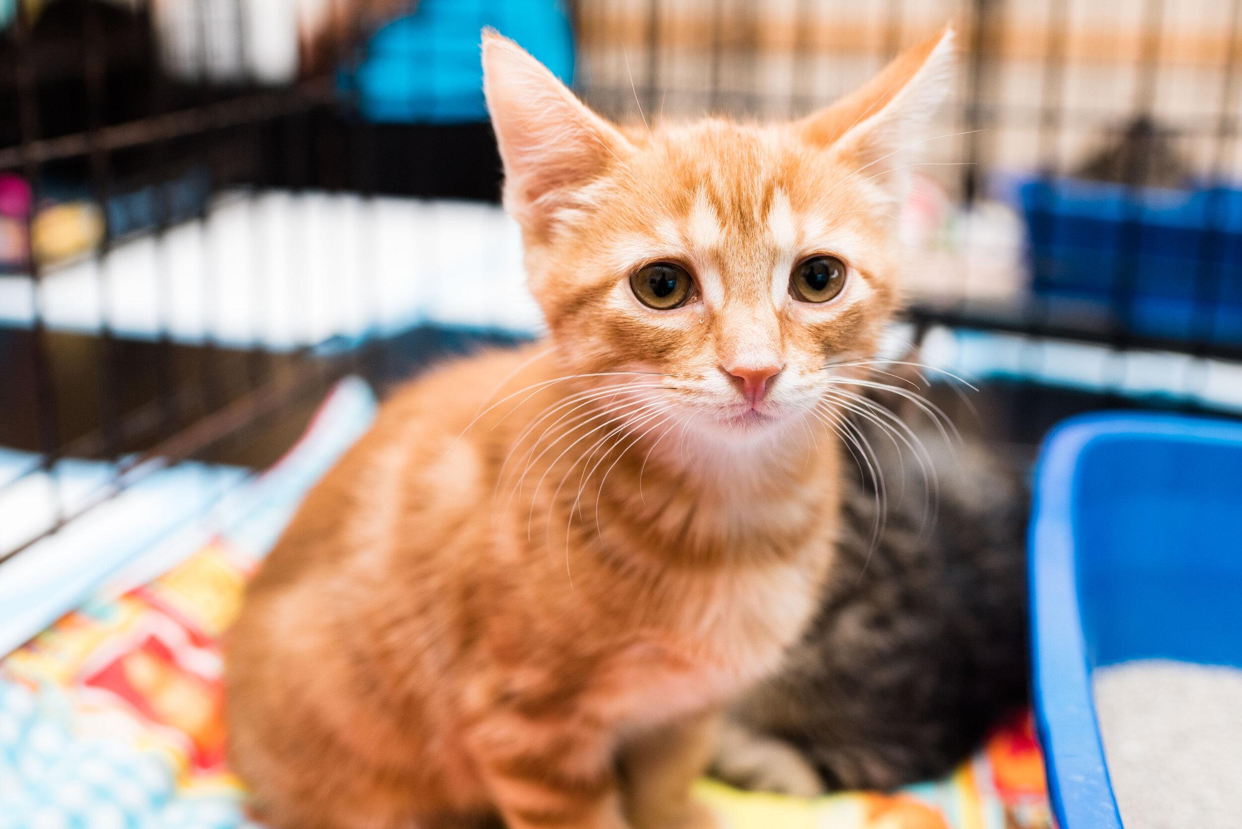 toledo area pet photography pet adoption-34.jpg