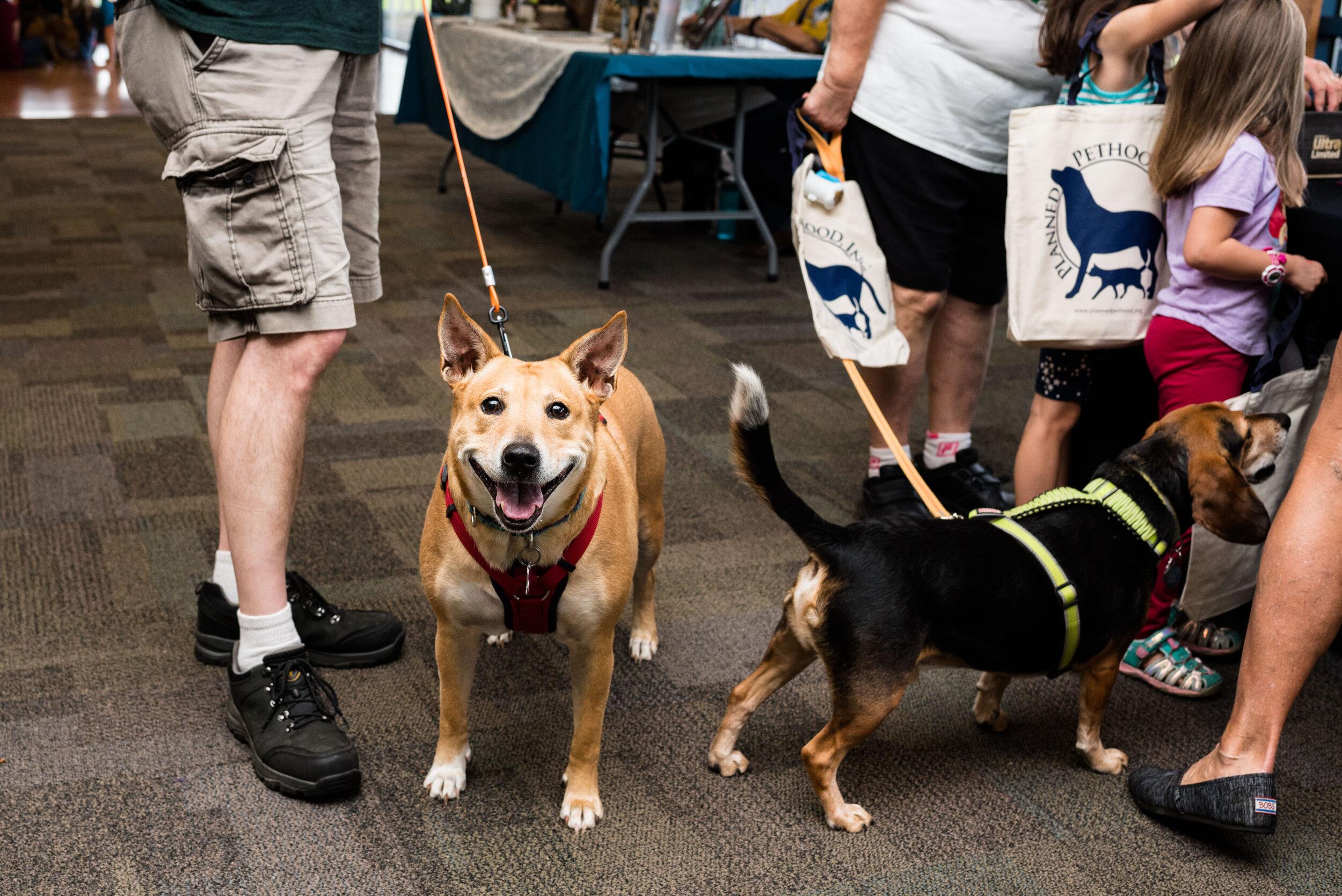 toledo area pet photography pet adoption-53.jpg