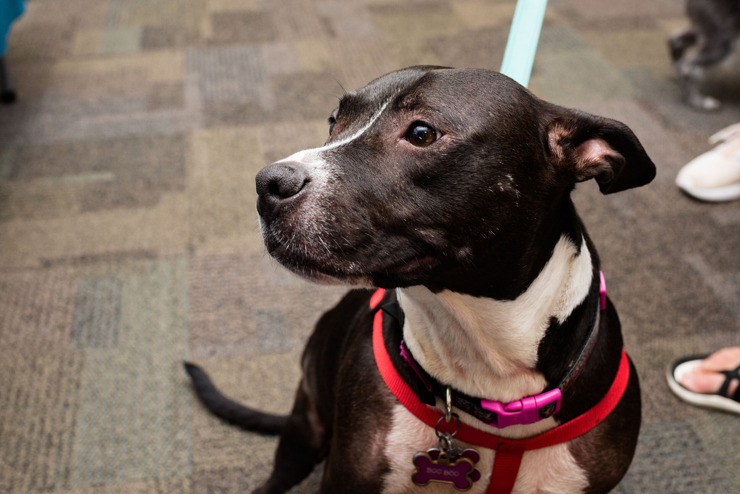 toledo area pet photography pet adoption-55.jpg