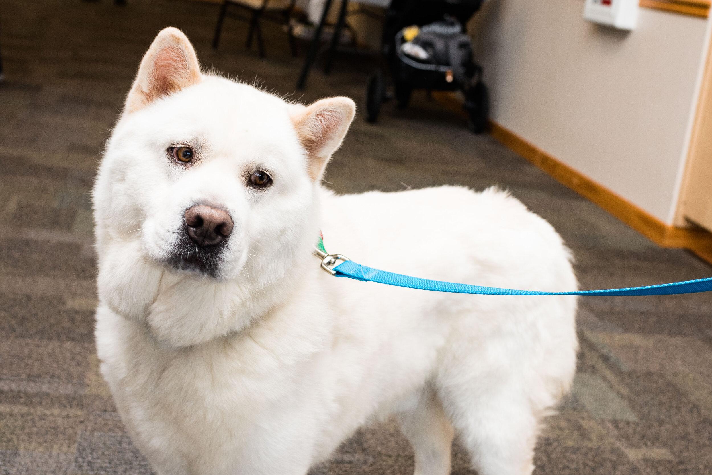 toledo area pet photography pet adoption-62.jpg