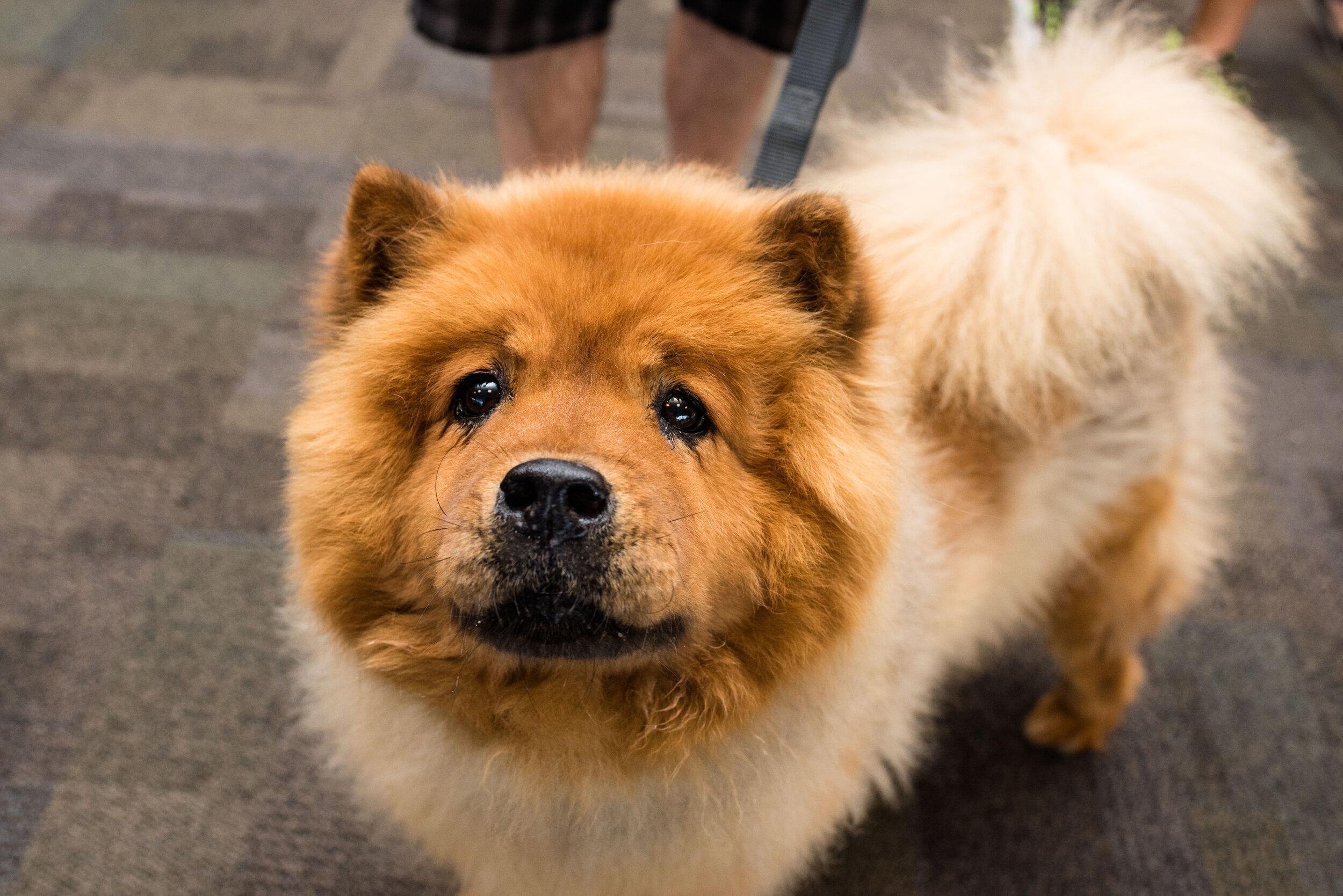 toledo area pet photography pet adoption-61.jpg