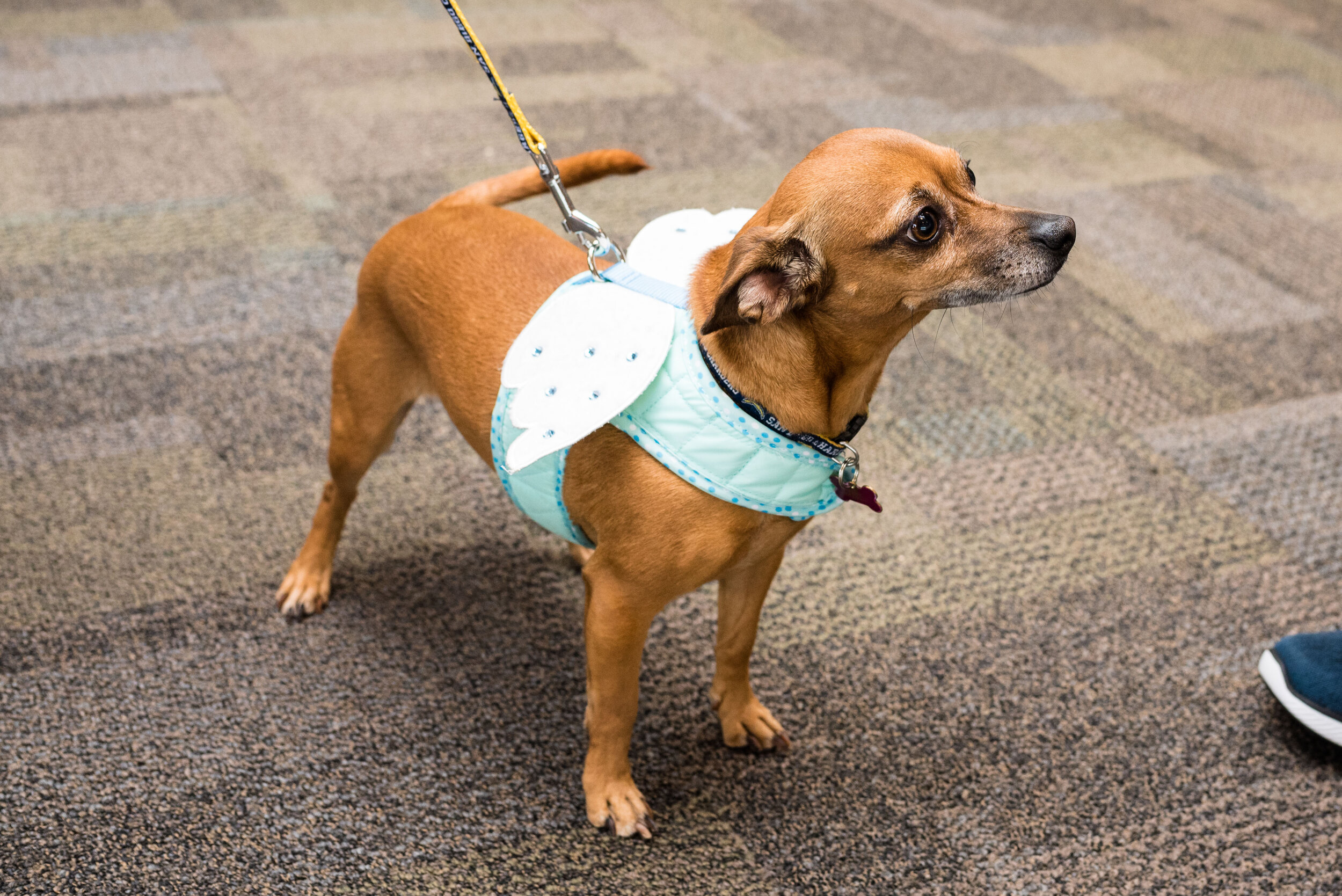 toledo area pet photography pet adoption-67.jpg