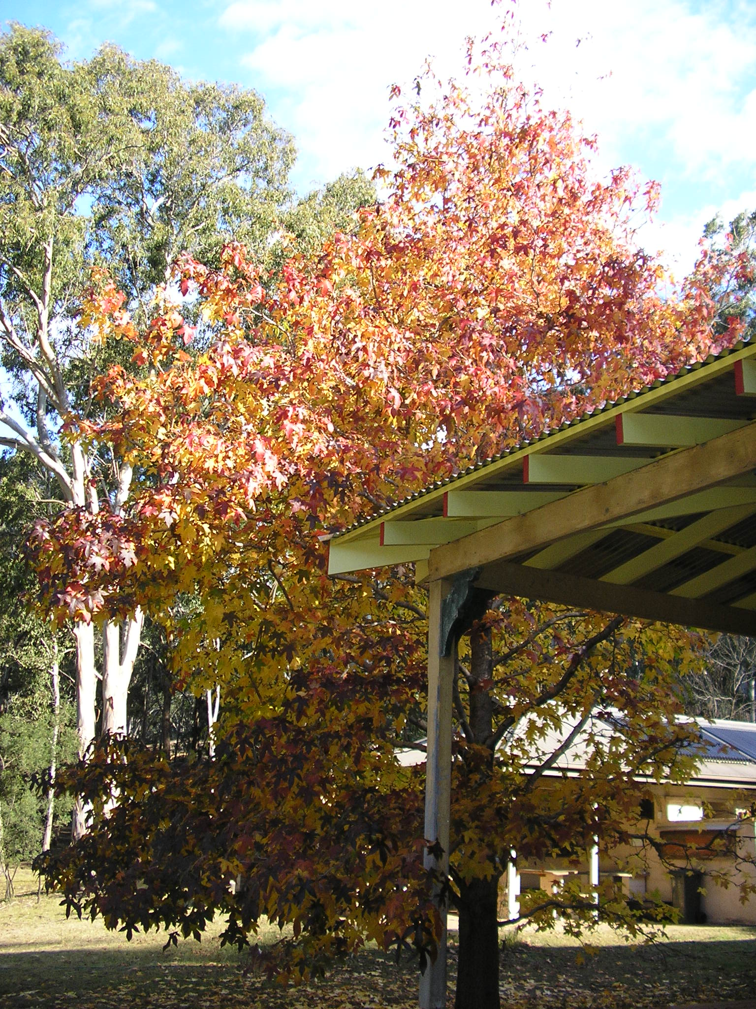 The new verandah roof