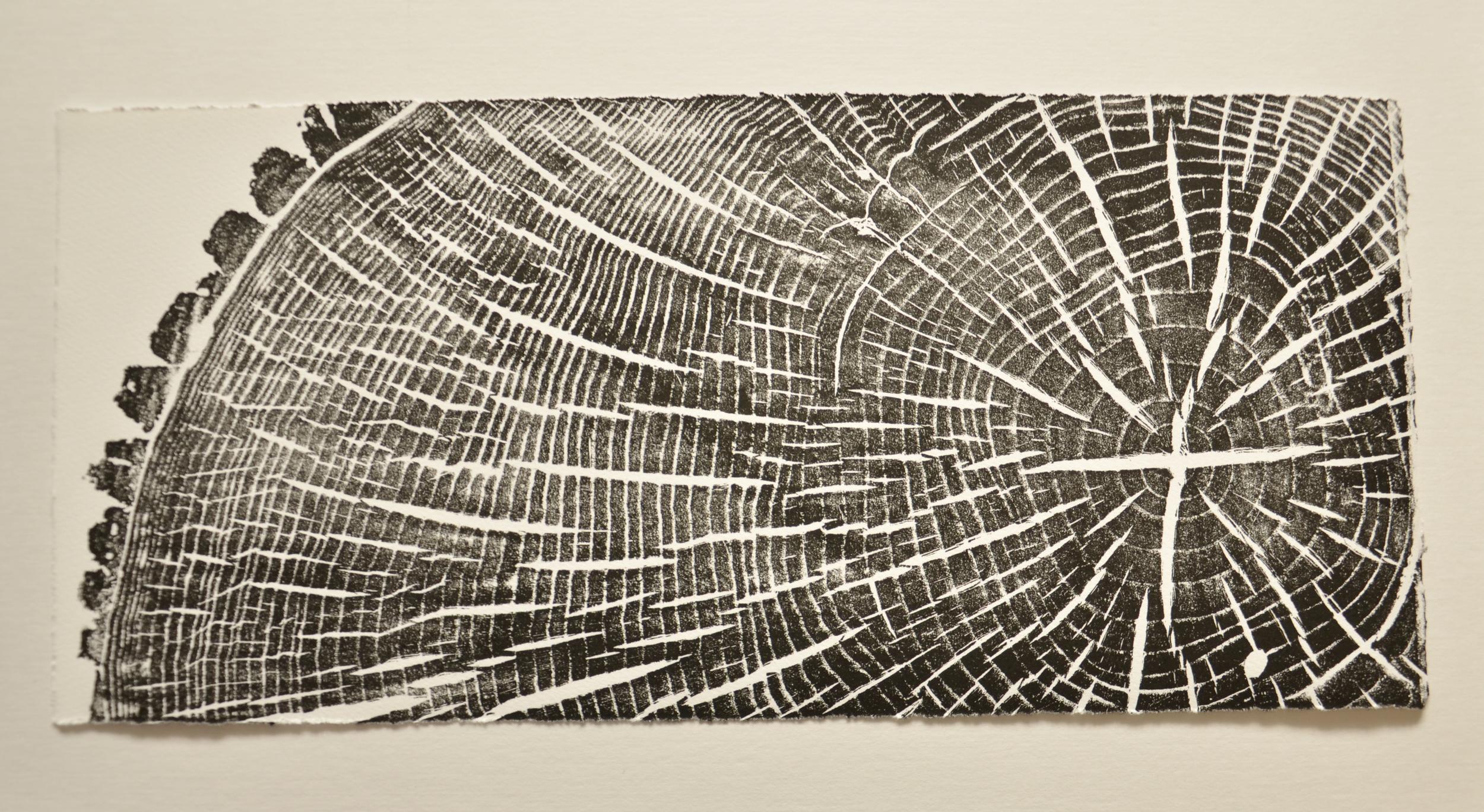 Ash Segment Print