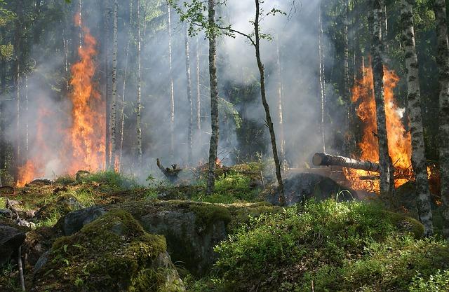 forest-fire-432870_640.jpg