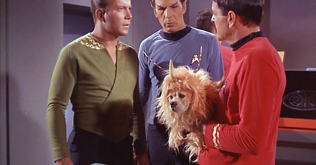 KmhMB-1445613059-embed-spacedog_scotty.jpg