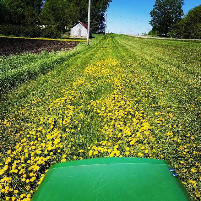 Sorry Bees time to mow the yellow perennials. #thevintagetin #shoplocal #shopbreak #johndeere #mowing #farmlife #springtime #lovemyjob #mnmaker #mnmade #minnesota #danilions