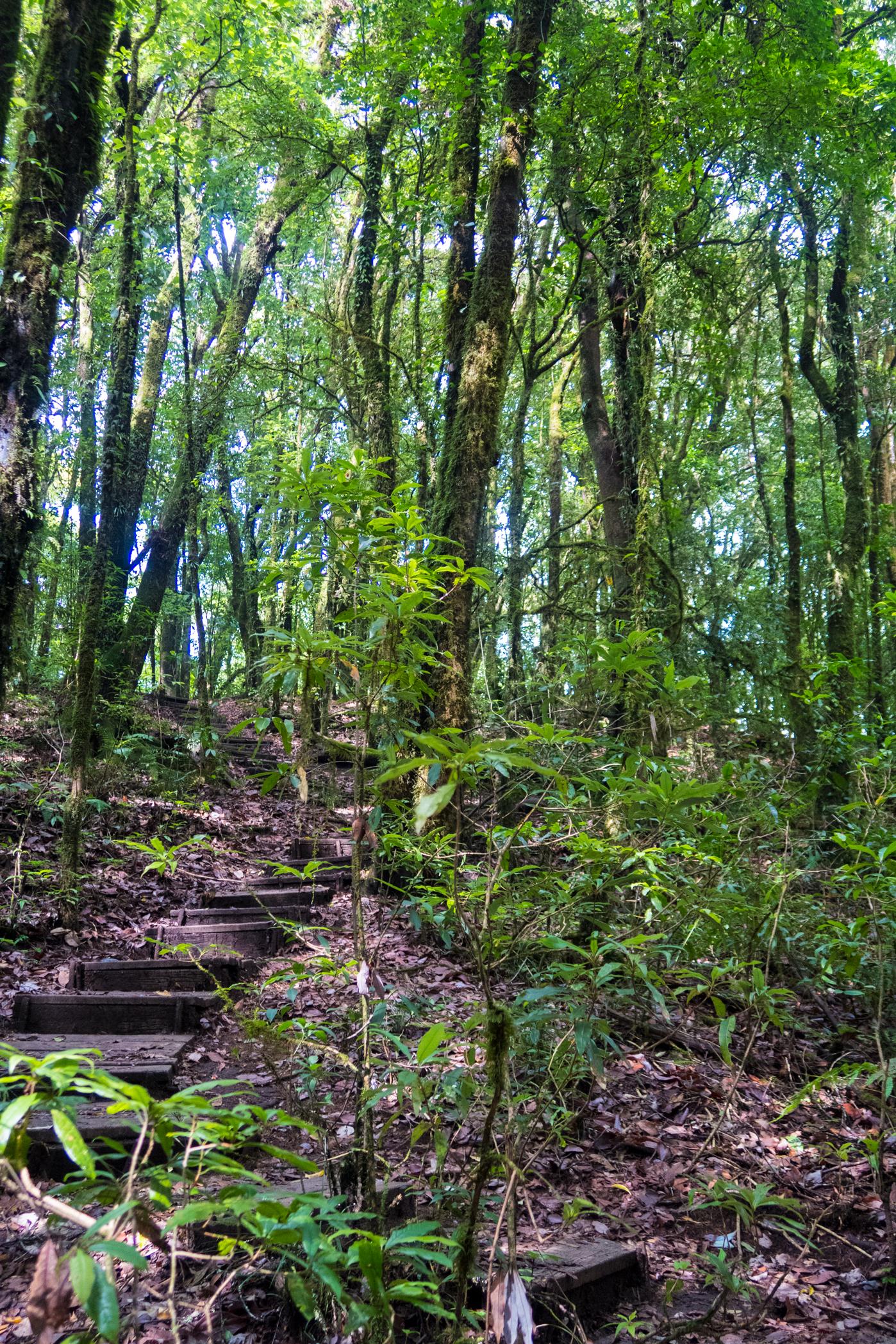 Doi_Inthanon_Trail
