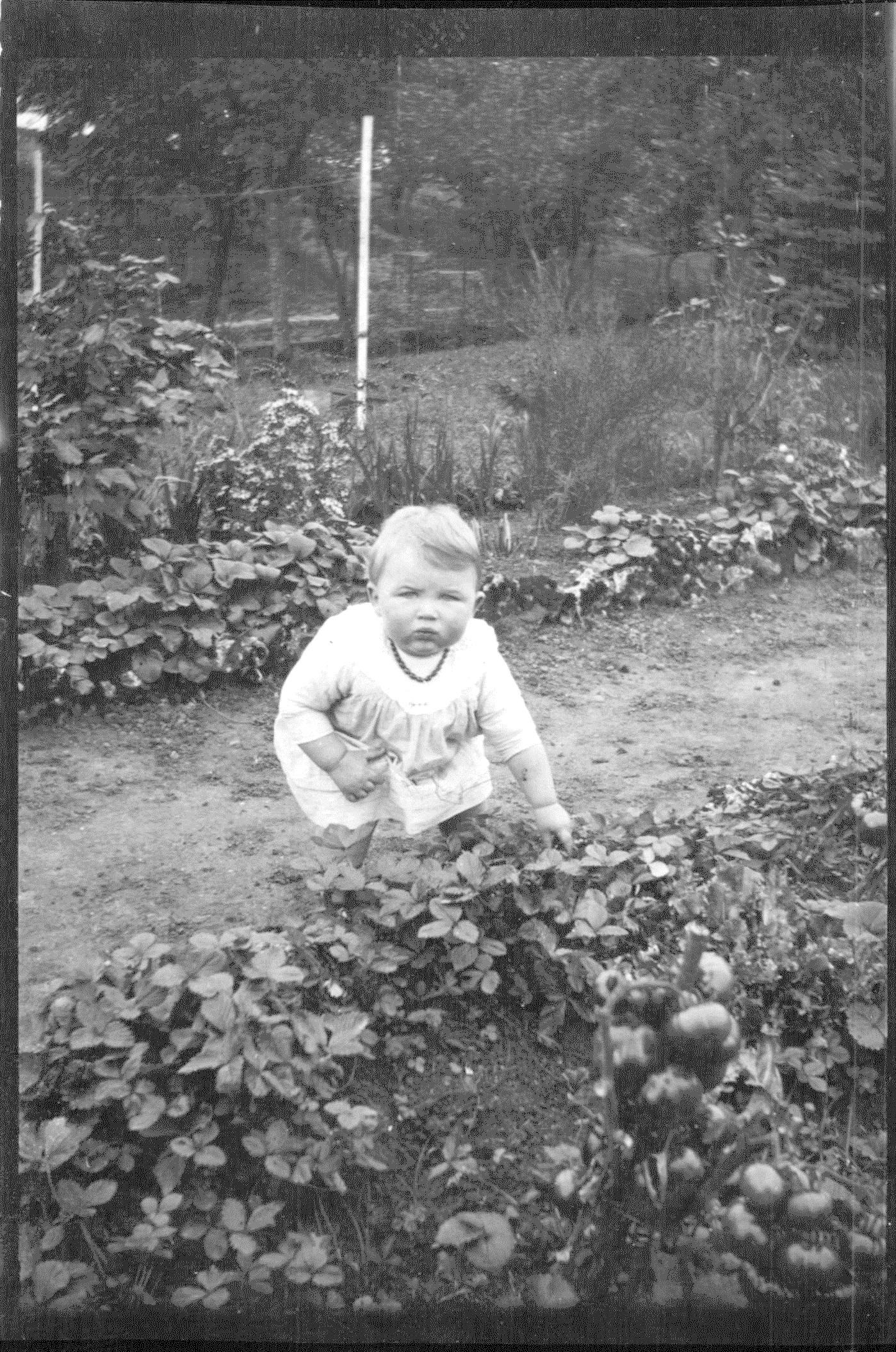 """Pierre en train de chercher des fraises """"Présent, qui est-ce qui m'appelle ?"""""""