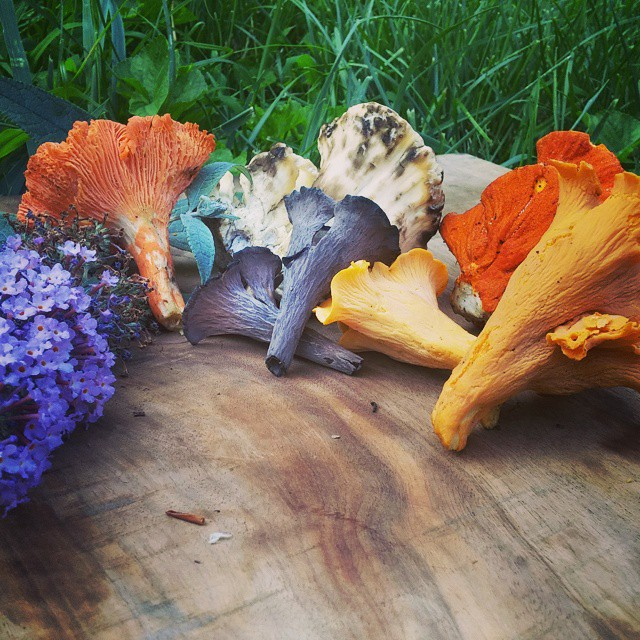 foraged summer mushrooms.jpg