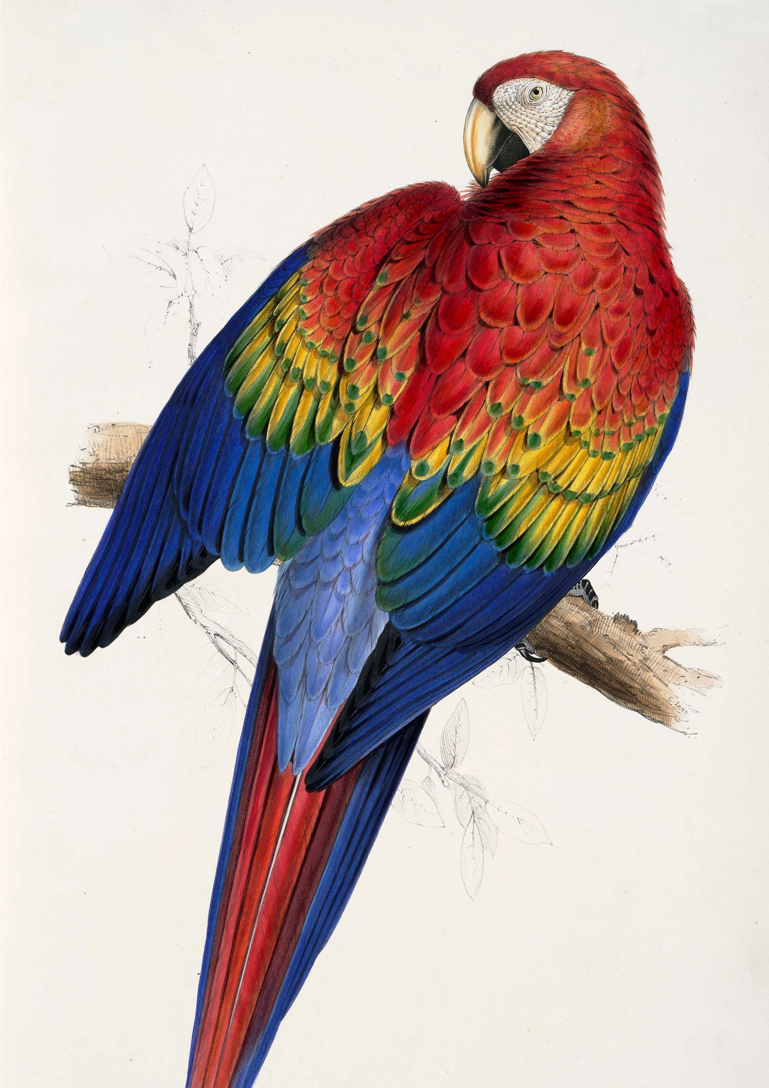 scarlett-bird.jpg